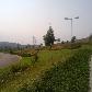 Landscaping beside motorway
